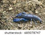 Shrimp Yabbie Crayfish  Chera...