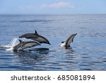 common dolphins jumping  costa... | Shutterstock . vector #685081894