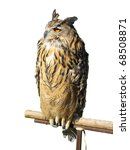 Stock photo wild owl sitting on a wooden support isolated over white background 68508871