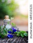 butterfly blue pea flower in... | Shutterstock . vector #685113121