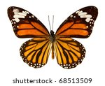 Stock photo the common tiger isolated on a white background 68513509