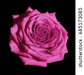 Pink Rose Flower Black Isolate...