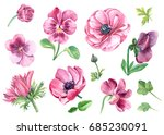 set of pansy and anemones... | Shutterstock . vector #685230091