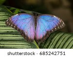 rainforest butterfly is sitting ...   Shutterstock . vector #685242751