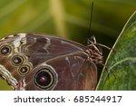 Rainforest Butterfly Is Sittin...