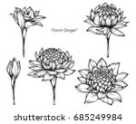 torch ginger flower by hand... | Shutterstock .eps vector #685249984