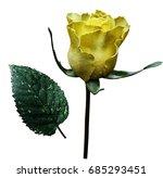 flower  rose yellow  on white...   Shutterstock . vector #685293451