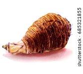 fresh whole taro root  isolated ... | Shutterstock . vector #685321855