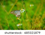 closeup butterfly on white... | Shutterstock . vector #685321879