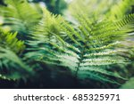 background with trees | Shutterstock . vector #685325971