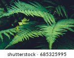 background with trees | Shutterstock . vector #685325995