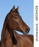 Portrait Of Nice Brown Horse O...