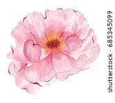 watercolor hand painted flower... | Shutterstock . vector #685345099