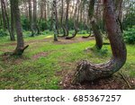 Mysterious Pine Trees In...