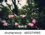 texture of plants in summer | Shutterstock . vector #685374985