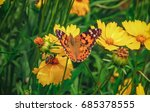 Stock photo  the butterfly sitting on a yellow flower view from above 685378555