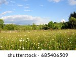 wildflowers with blue sky on... | Shutterstock . vector #685406509