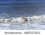 long billed   beak curlew...   Shutterstock . vector #685527421