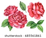 Set Red Roses  Watercolor