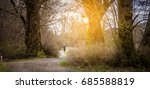 walking in forest with sun light | Shutterstock . vector #685588819