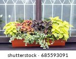 different plants coleus grow in ... | Shutterstock . vector #685593091