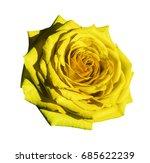 yellow rose flower  white...   Shutterstock . vector #685622239