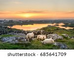sunset at a lake with sheep...   Shutterstock . vector #685641709
