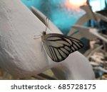 butterfly | Shutterstock . vector #685728175
