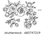 rose flowers by hand drawing... | Shutterstock .eps vector #685747219