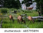 family deer in the yellowstone... | Shutterstock . vector #685795894