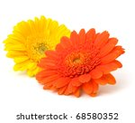 Beautiful Daisy Gerbera Flowers ...