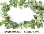 green leaf isolated on white... | Shutterstock . vector #685804291