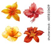 yellow and red tropical flowers | Shutterstock . vector #685810609