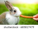 Stock photo a lovely white rabbit eat carrot in green field 685817479
