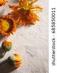 marigold flowers on a textured... | Shutterstock . vector #685850011