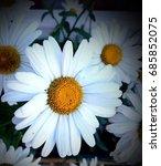flora | Shutterstock . vector #685852075