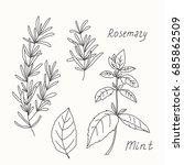 herbs and spices sketch set.
