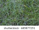 green grass background | Shutterstock . vector #685877251