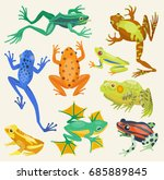 frog cartoon tropical animals... | Shutterstock .eps vector #685889845