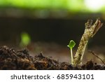 young plant growing from the... | Shutterstock . vector #685943101