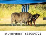 dogs playing | Shutterstock . vector #686064721