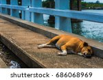 the stray dog is alone | Shutterstock . vector #686068969