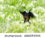 Stock photo portrait of a happy dog in the grass a beautiful black puppy is sitting in the ears long haired 686094544