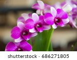 purple orchids  violet orchids. ...   Shutterstock . vector #686271805
