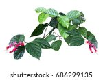 green ivy and flower plant ... | Shutterstock . vector #686299135