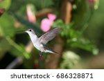 ruby throated hummingbird in... | Shutterstock . vector #686328871