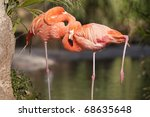 two chile flamongo resting in... | Shutterstock . vector #68635648