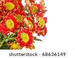 chrysanthemum flowers | Shutterstock . vector #68636149