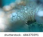 Abstract Macro Photo.dandelion...