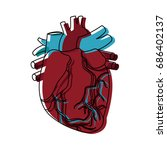 anatomy of the human heart... | Shutterstock .eps vector #686402137